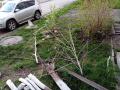 В Новокузнецке незаконно вырубили деревья