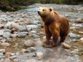 В Кузбассе рядом с деревней ходят медведи