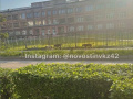 В Новокузнецке бродячие собаки напали на ребёнка