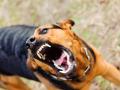 Кемеровские депутаты заявили об отсутствии наказания за укусы собак