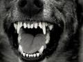 Кузбассовцы сообщают о зверских методах отлова бездомных собак