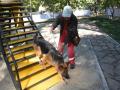 В Новокузнецке появится площадка для выгула собак, роллердром и футбольное поле