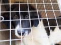 Мэр Новокузнецка рассказал, как защитить детей от агрессивных собак