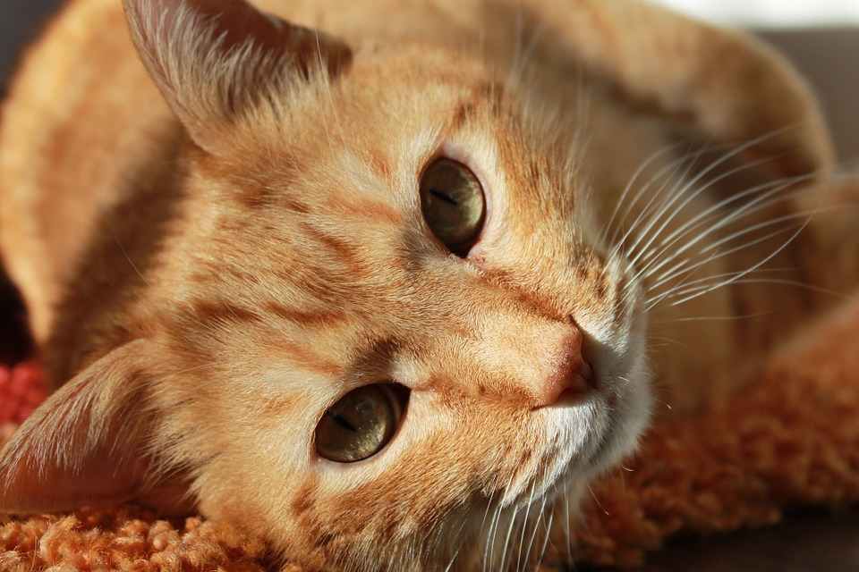 cat-636172_960_720